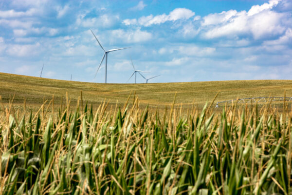 Open field with blue sky and electric windmills in distance