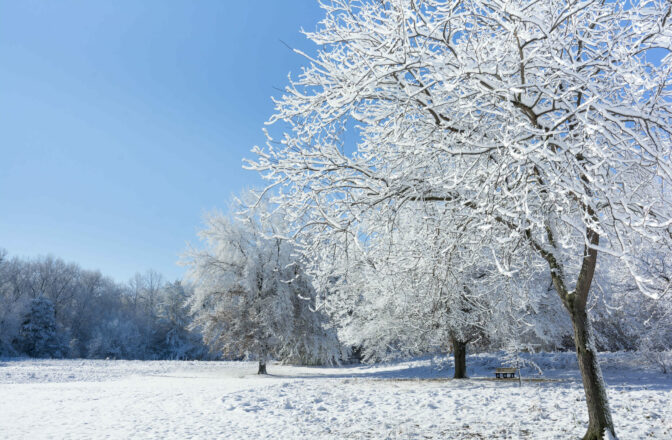 bright winter field scene with deciduous trees covered in snow