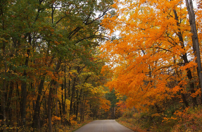 paved road through autumn forest