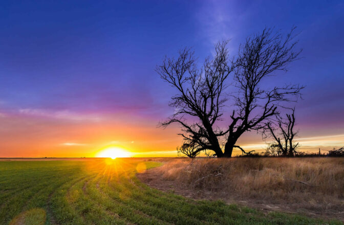 field with large tree at sunset