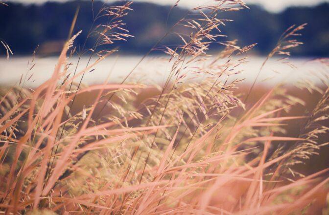 Prairie in Hudson, WI