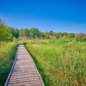 wood plank walkway through tall grass
