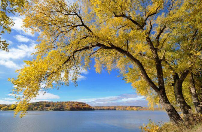large tree on lakeshore