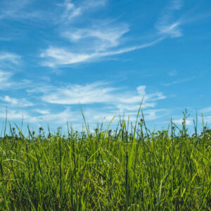 bright scene of prairie tall grass and open blue sky